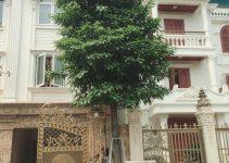 Trồng cây xanh tại biệt thự liền kề Trung Văn